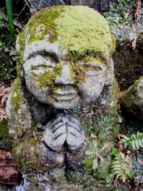 Study theravada buddhism online