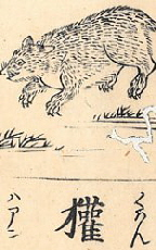 Badger as depicted in the early 18th-century Wakan Sansai-zue.