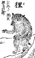 Tanuki as appearing in the 1666 Kinmozui