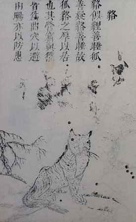Mujina image from the San-ts'ai t'u-hui