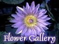 Japanese Flower Gallery.