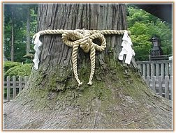 Shinto Rope - Signifies that a Tree Kami lives within the tree, signifies sacred ground, Egara Tenjin, Kamakura