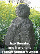 Jizo and Nanohana, Japan, April